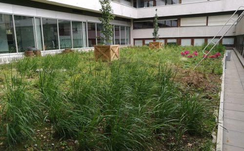 les-jardins-dines-jardin-toit-5