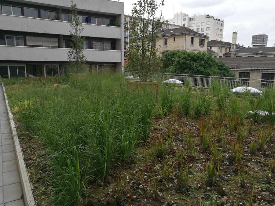 les-jardins-dines-jardin-toit-6